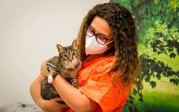 veterinario con gatto