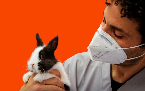 veterinario con coniglio