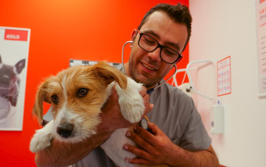 veterinario con cane